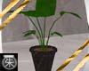 }T{ Elephant ear plant