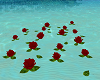 Floating Red Roses