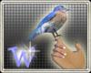 *W* Handheld Bluebird