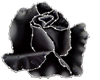 Pearl Studded Black Rose