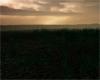 Dawn's Foggy Field