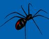 ~R Redback Spider 3