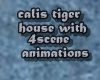 calis tiger house