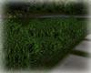 [Luv] Garden Bush