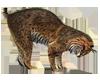 Lynx Wild Cat Sticker