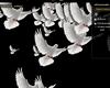 wedding dove white