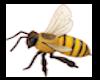 DGT Bees