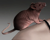 H! Animated Mouse