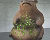 Bear Ivy Plant