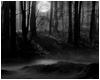 [TP] Black Forest