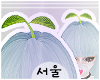 서울 Kawaii Sprout.