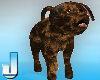 Fluffy Mokka Pup