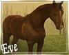 ♣ Animated Horse