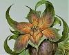 Flora's Petals~