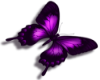 Purple butterfly L