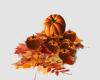 [Der] Pumpkins