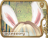 m// mon Lapin ~ears