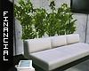 ϟ Couch + Bamboo