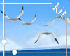 [kit]Seagulls On The Sea