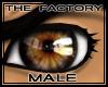 TF Stunning Eyes Brown