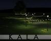 !A Night garden