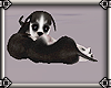 ~E- Husky Pup Twins