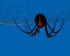 ~R Giant Redback w Web