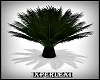 palm plant