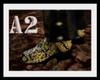[A2] Boa boots