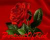 R Rose