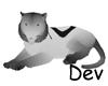 !live-Tiger Dev.