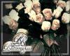 Roses Black Cream Roses