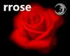 [rrose] Red Falling Rose