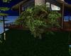 Mid Summer Nights Tree