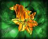 ~B~ Fire Lily