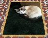 rug kitty