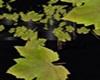 dj light foglie