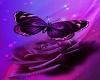 purple rose butterflybar