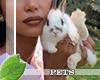 !Ⓜ baby bunny