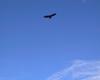 Blue sky with Condor