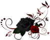 Red/Black Roses- BR