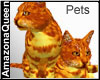 Pet Cat Twins