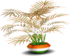 ST PATTY PLANT