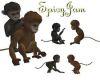 Mixed playful monkeys