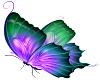 Vibrancy Butterfly 3
