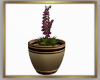 Small Potted Derive