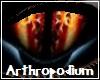 Arthropodium Eyes M