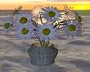 Daisies in wicker vase