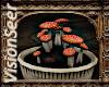 Alchemy Mushrooms 1