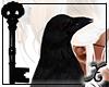 *SX* Mischief Raven Pet